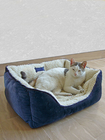 Un divano per cani e gatti for Divano per cani