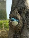 Uccellino per tronco