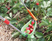 Frupy, il set per raccogliere piccoli frutti