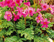 5 Bulbi di pianta anti roditori