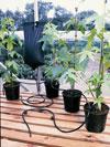 Sistema d'irrigazione a gocciolamento