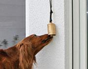DLIN DLON, è il cane che suona alla porta!